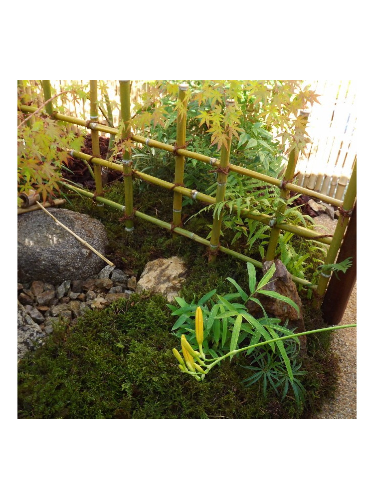 Stage palissades bambou perfectionnement cr ation de Creation jardin japonais photos