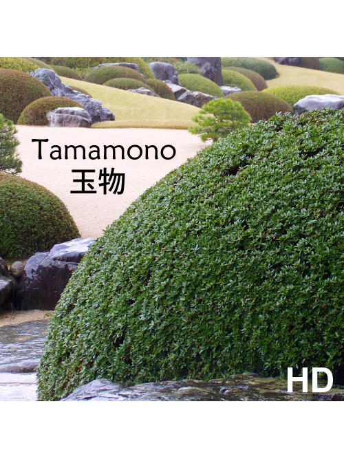 Video de formation - TAMAMONO