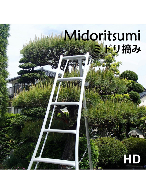 MIDORITSUMI - Pines maintenance