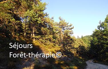 Séjours forêt-thérapie